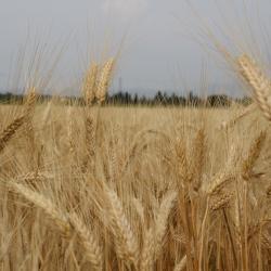 Nos céréales